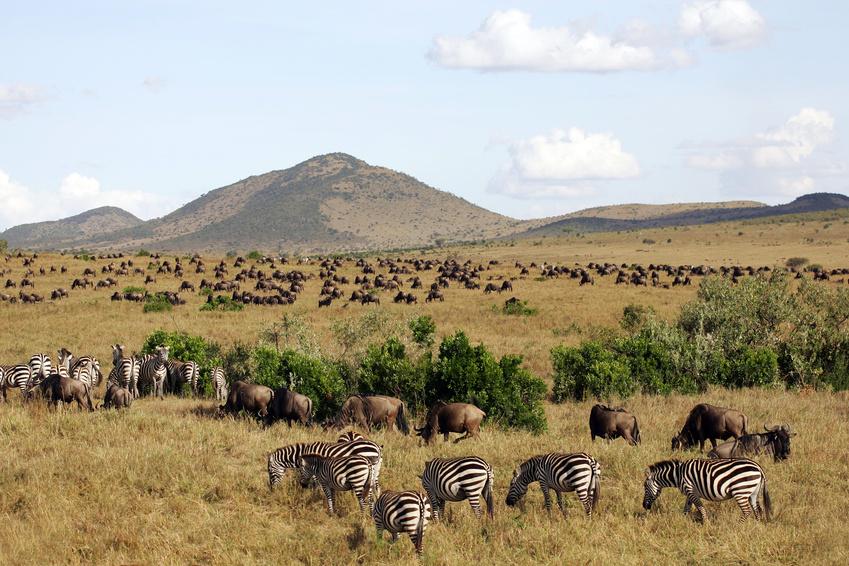 Kenia Reisen