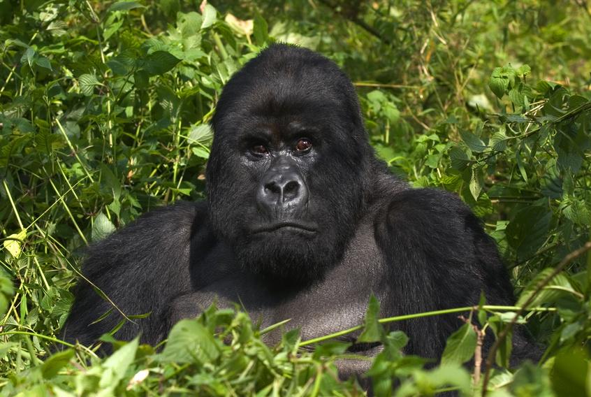 Kongo (Rep.) Reisen