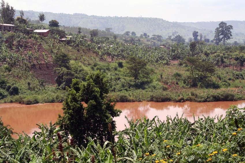 Uganda: Berggorillas, Schimpansen & Nashörner