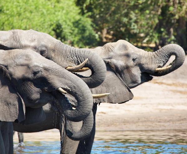 Botswana - Im Reich der wilden Tiere