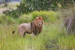 Botswana - Namibia - Simbabwe - Safariparadiese im Dreiländereck