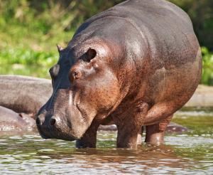 Botswana - Wo die wilden Tiere wohnen