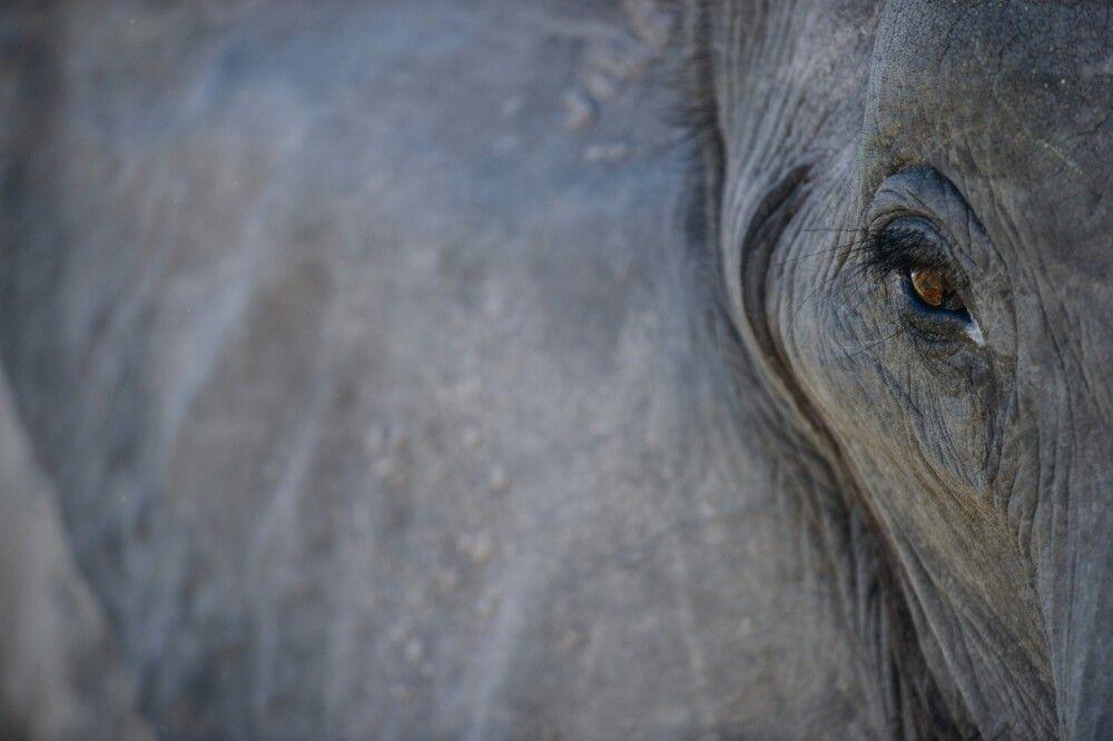 Botswana • Namibia • Simbabwe - Auf den Spuren der grauen Riesen