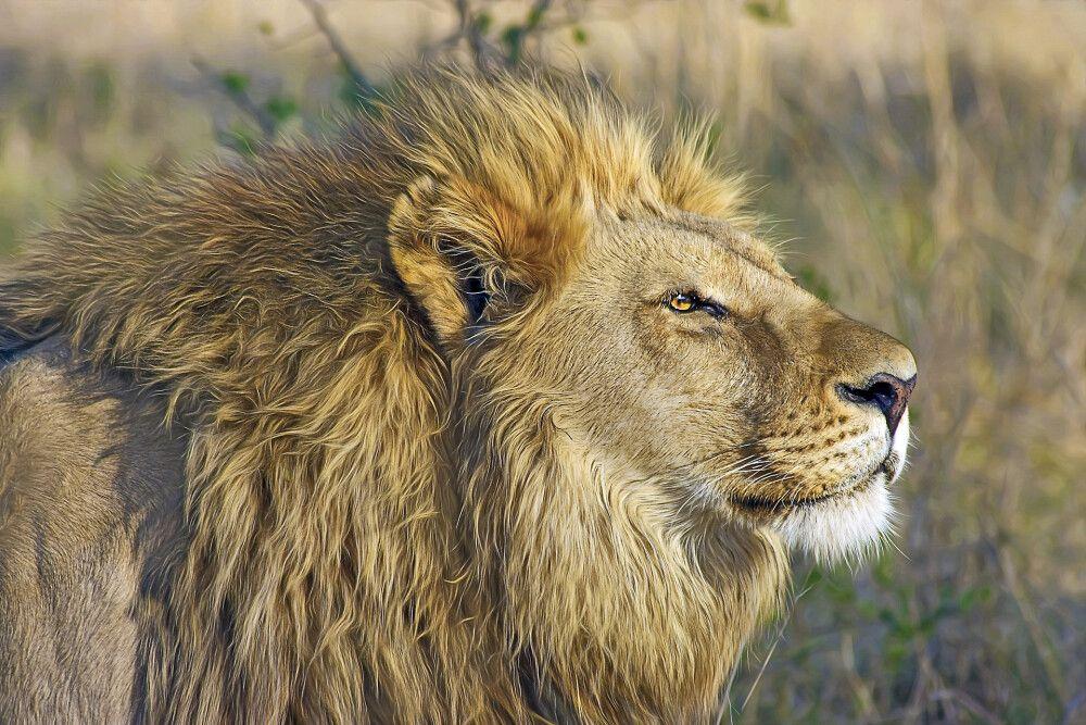 Botswana • Namibia • Simbabwe - Safaritraum Botswana