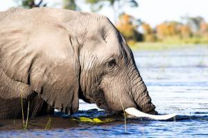 Botswana • Namibia • Simbabwe - Unterwegs im Königreich der Elefanten