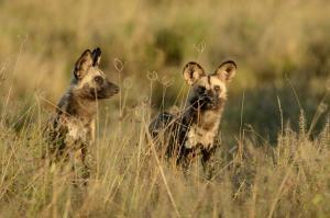 Botswana • Simbabwe - Botswana stilvoll: Wildnis-Abenteuer & Lodge-Entspannung
