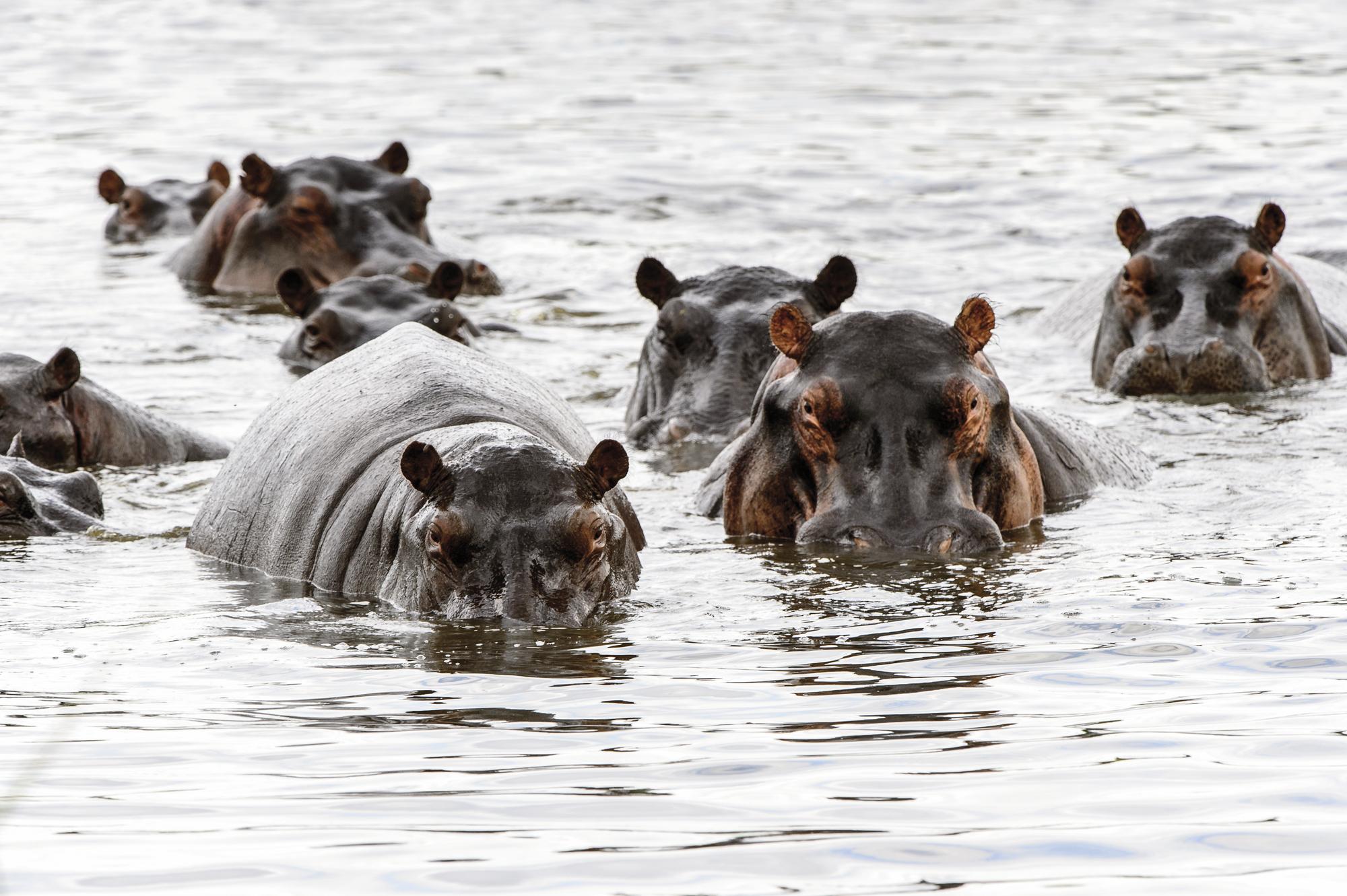 Botswanas Wildparadiese