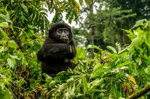 Der Nil: Lebensader Afrikas