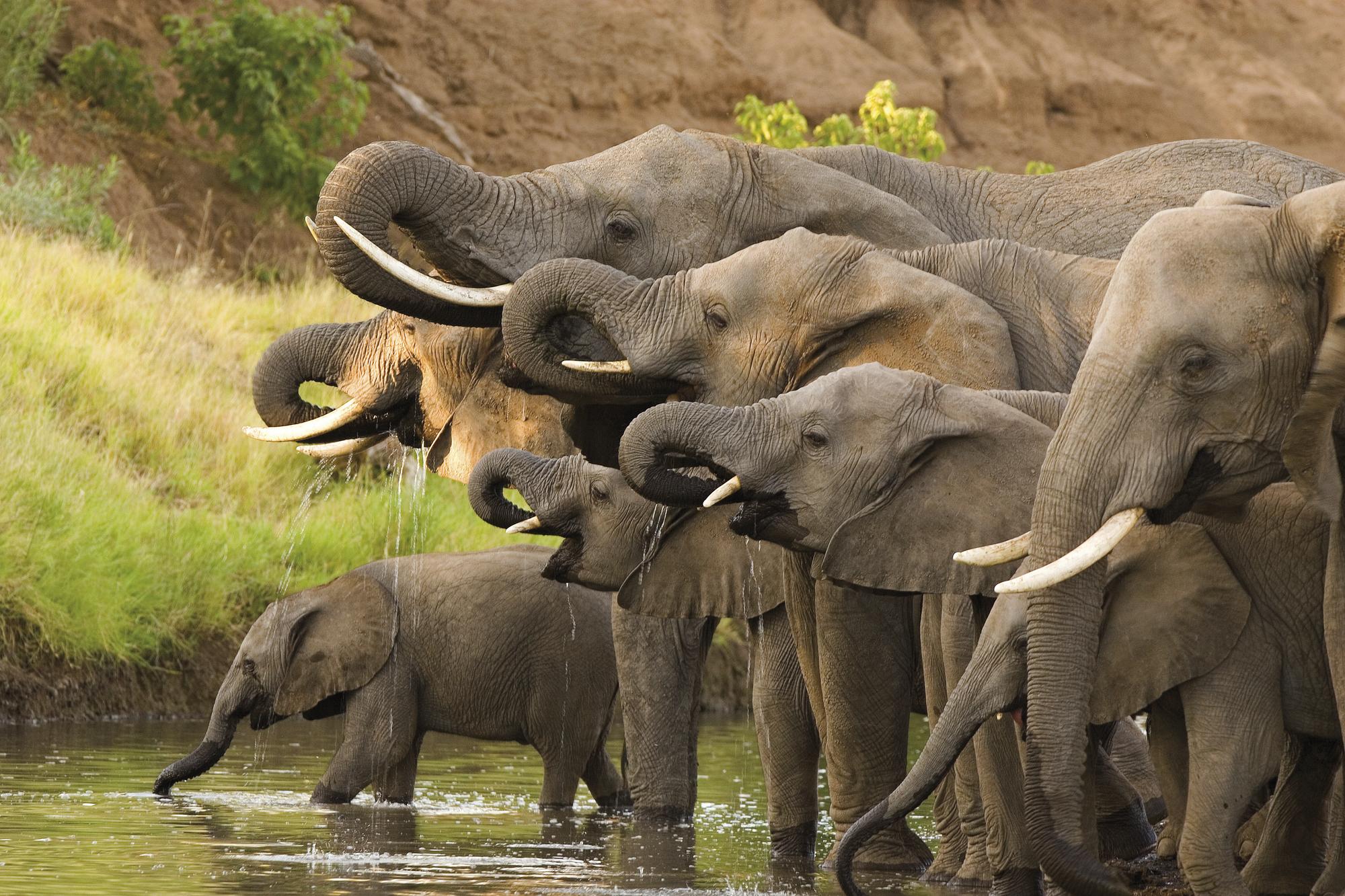 Grosse Botswana-Expedition
