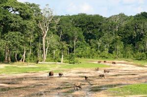 Kamerun • Zentralafrika - In die Tiefen des Regenwaldes