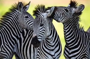 Kenia & Tansania: Höhepunkte mit Sansibar