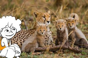 Kenia - Familienabenteuer im Land der Massai