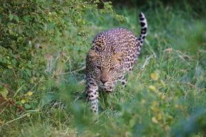Kenia - Kenia für Foto-Individualisten