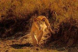 Kenia - Olympus-Fotocampus in der Masai Mara