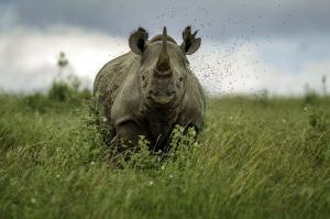 Kenia - Professionelle Tier- und Naturfotografie
