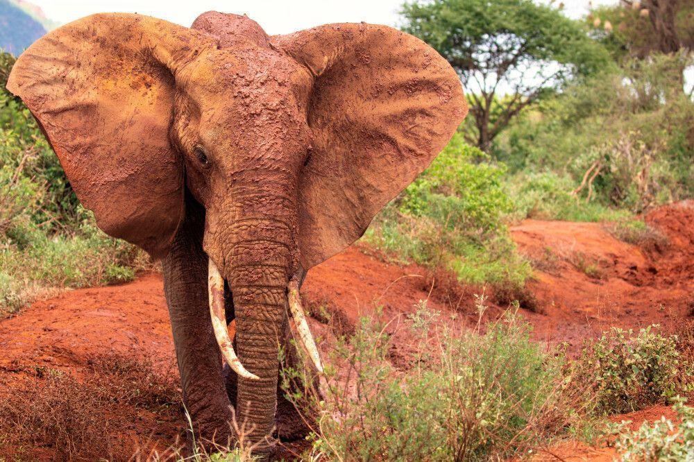 Kenia - Von der Masai Mara an den Indischen Ozean