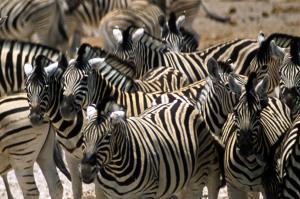 Kenia  -  grenzenloses Tierparadies