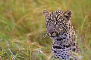 Kenia • Seychellen - Out of Africa und Inselparadies