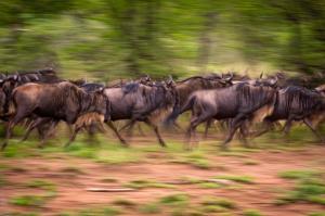 Kenia • Tansania - Auf den Spuren der großen Tierwanderung