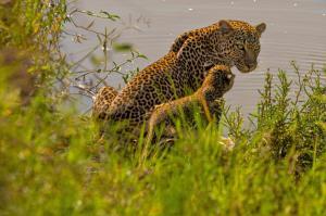 Kenia • Tansania - Lodgesafari und Sansibar