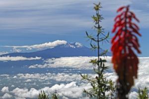 Kenia • Tansania - Mount Kenya, Safari und Kilimanjaro