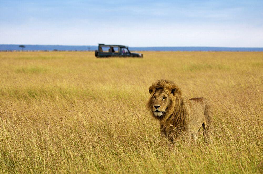 Kenia • Uganda - Die Könige der Savanne und des Regenwaldes