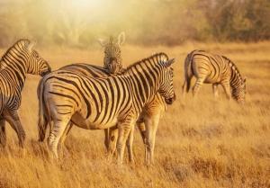 Kleingruppen-Rundreise Namibia - Botswana & Viktoria-Fälle
