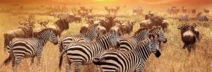 Kleingruppen-Rundreise Simbabwe, Mosambik & Malawi