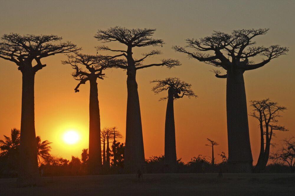 Madagaskar - Im Land der Baobabs