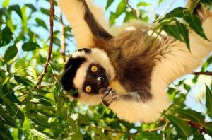 Madagaskar - Kaleidoskop der Natur