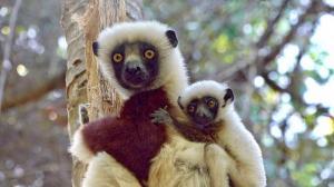Madagaskar - Von den Trockenwäldern der Westküste zum Regenwald an der Ostküste