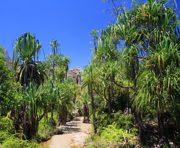 Madagaskar – Insel der Lemuren