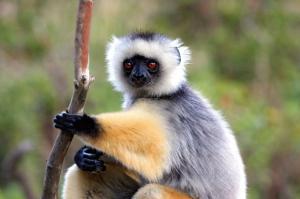 Madagaskar • Mauritius - Zu den Inseln des Indik