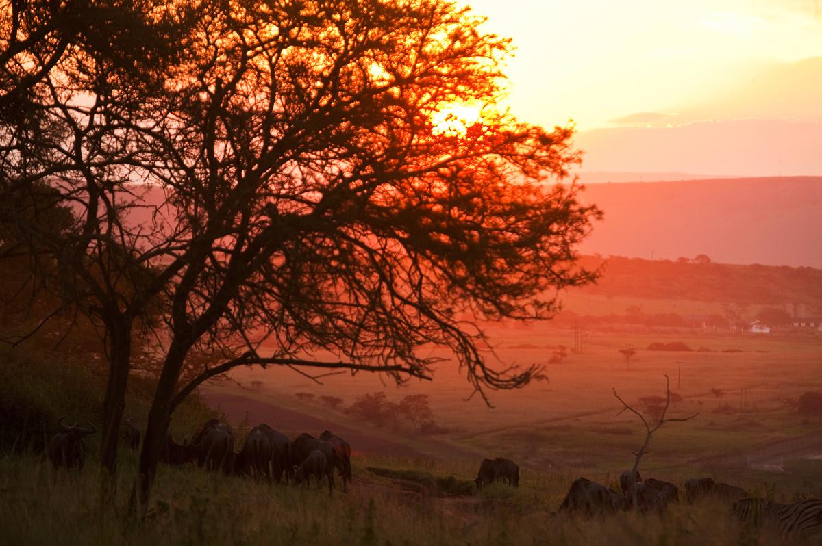 Magisches Südafrika