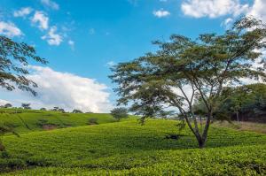 Malawi - Tiere, Baden, Teeplantagen
