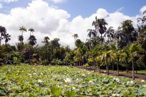 Mauritius  -  Badeverlängerung am Indischen Ozean im Trou aux Biches