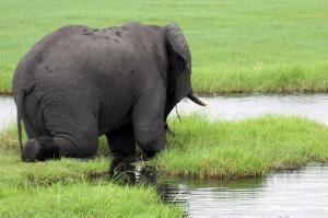 Namibia, Botswana und Simbabwe  -  Naturwunder entdecken