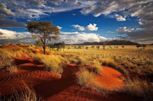 Namibia - Best of Nature
