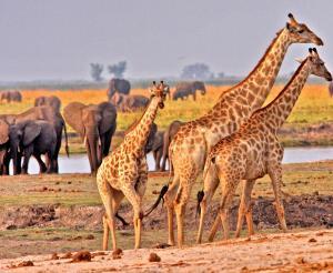 Namibia - Große Gästefarm- und Lodge-Rundreise