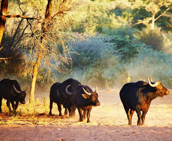 Namibia - Namibia intensiv