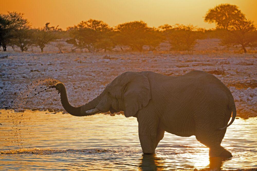 Namibia - Zwischen Sossusvlei und Etosha