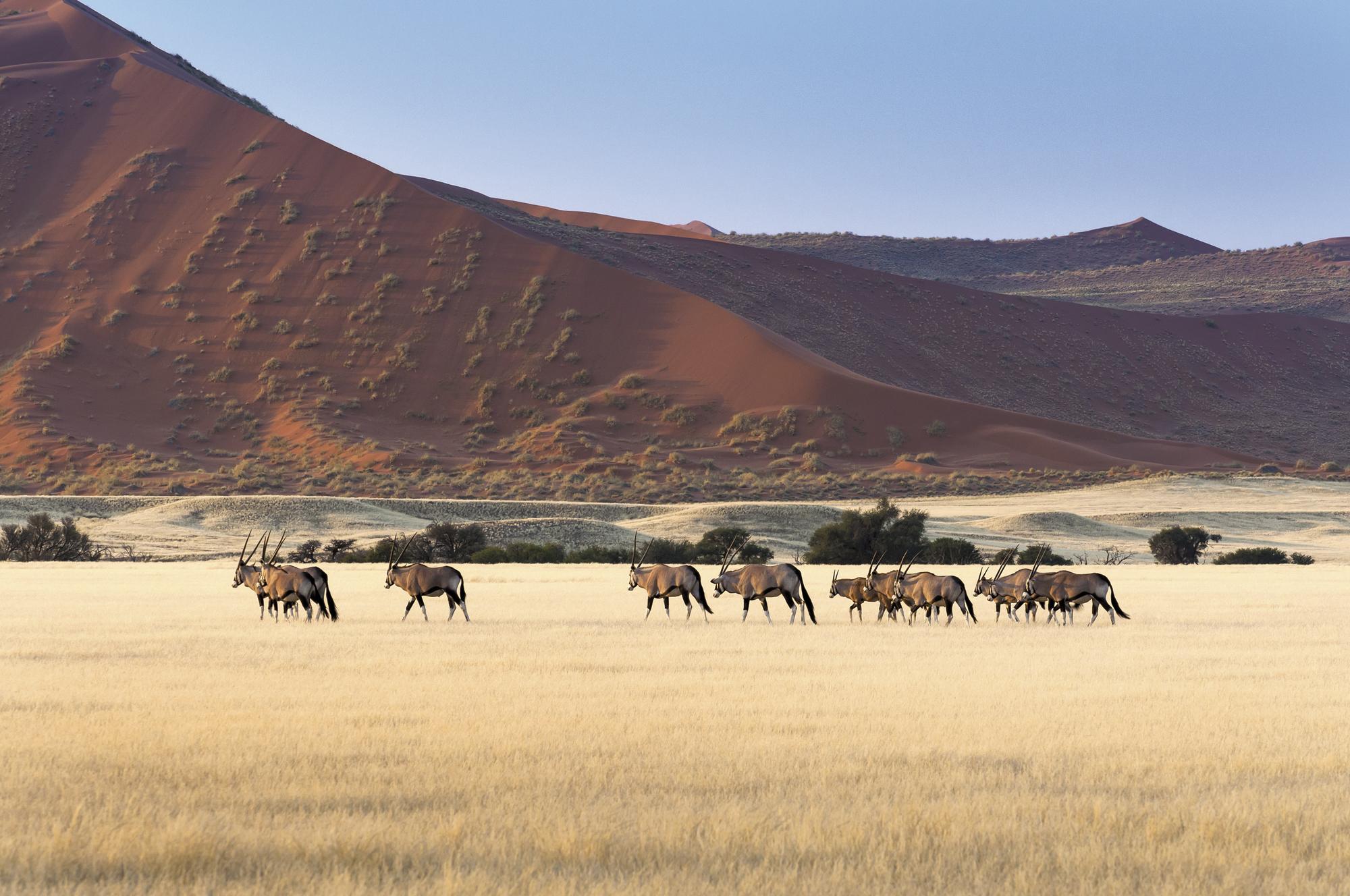 Namibia - einzigartig anders
