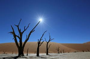 Namibia • Botswana • Sambia - Wüste, Felsmalereien und Victoriafälle