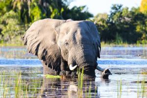 Namibia • Botswana  • Simbabwe - Vom Wüstenmeer zum Sambesi