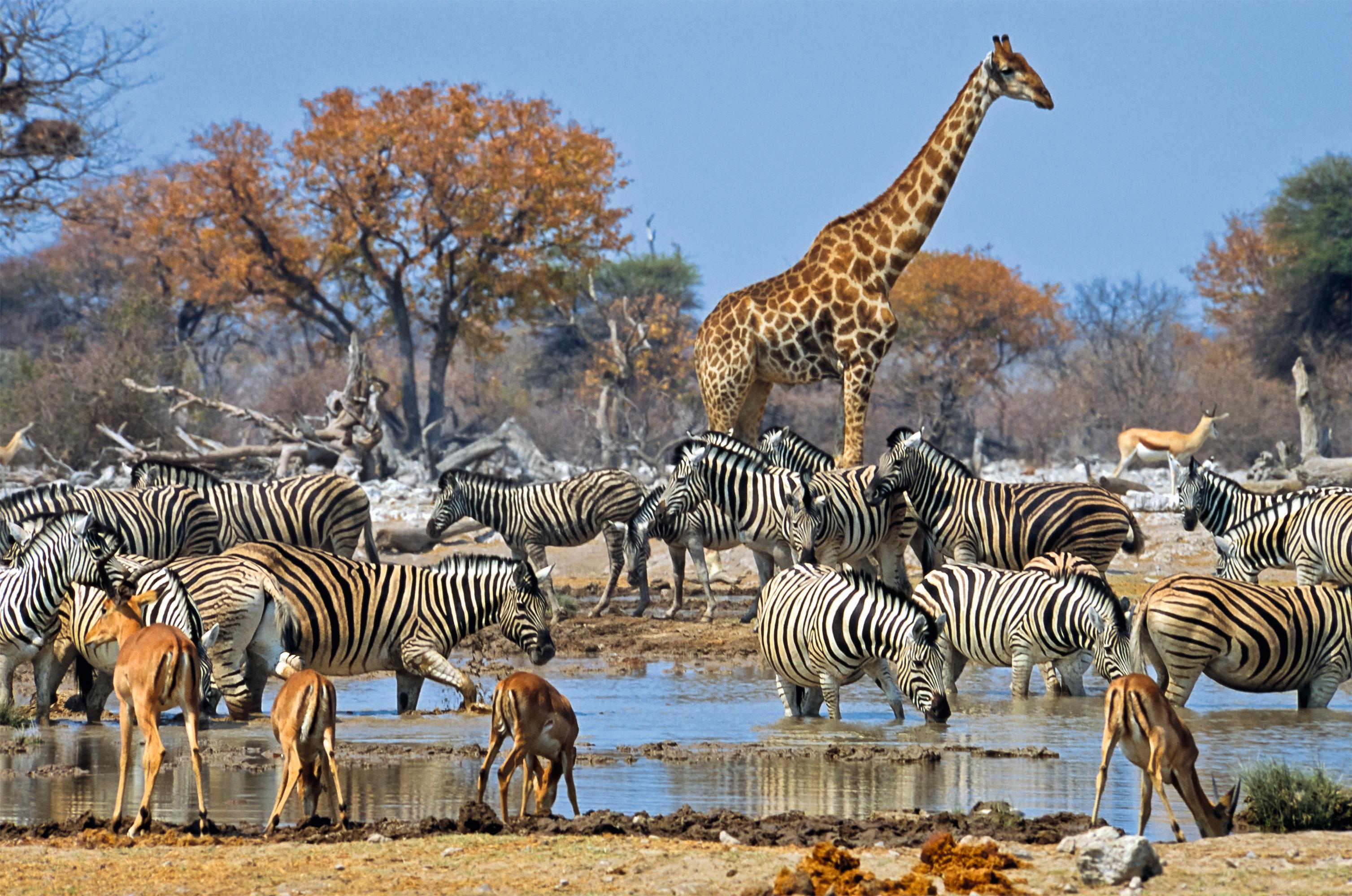Namibia: Höhepunkte