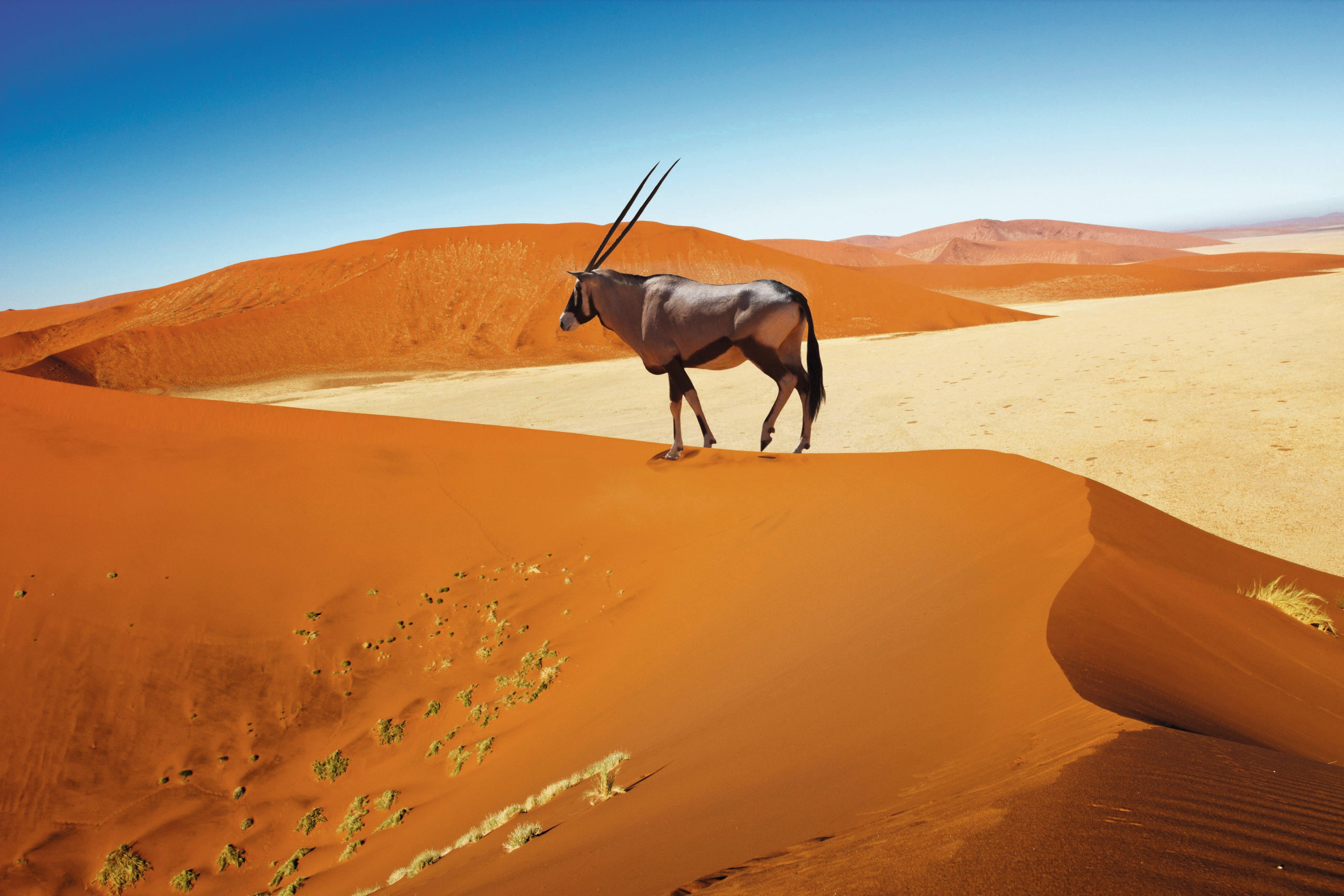 Namibia: Mit Flair
