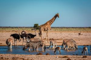 Namibia: Sternstunden