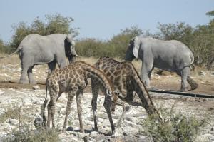 Namibia: Wüste - Küste & Busch