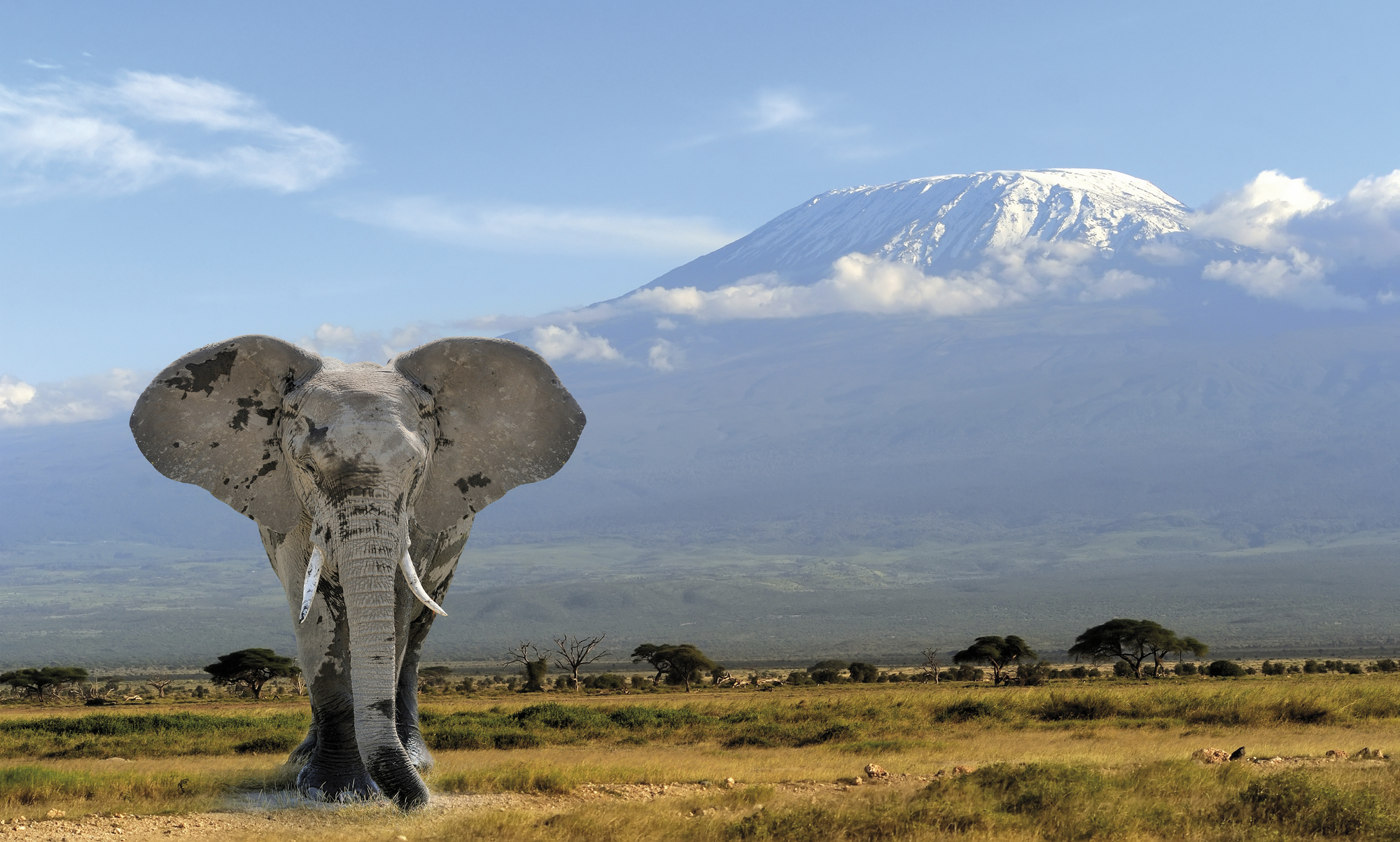Nationalparks in Kenia und Tanzania