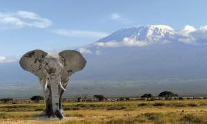 Nationalparks in Kenia und Tanzania